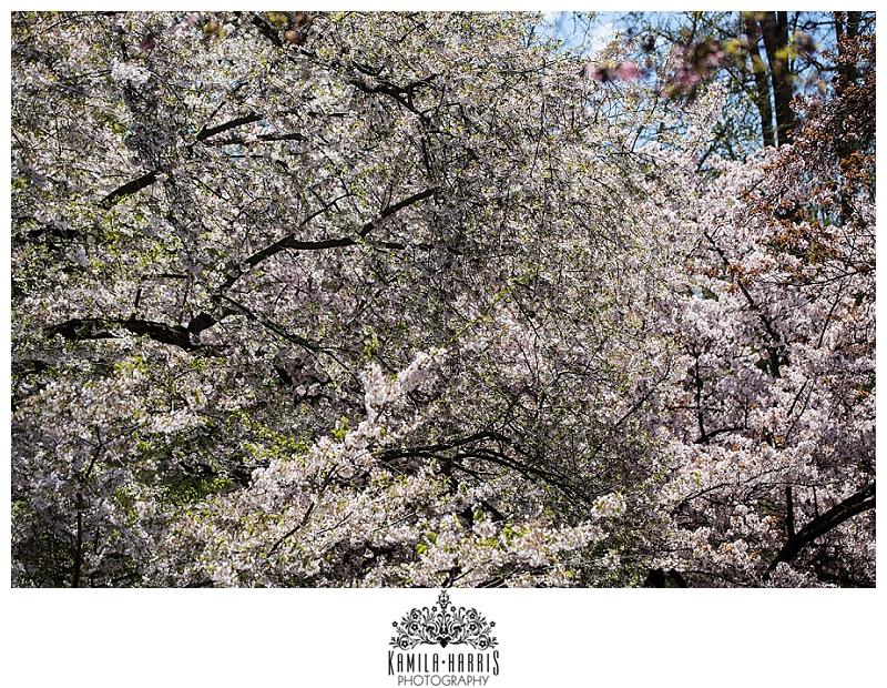 Brooklyn Botanic Garden Cherry Blossom Festival Sakura Matsuri Photographer NYC Cosplay Manga Anime Steampunk