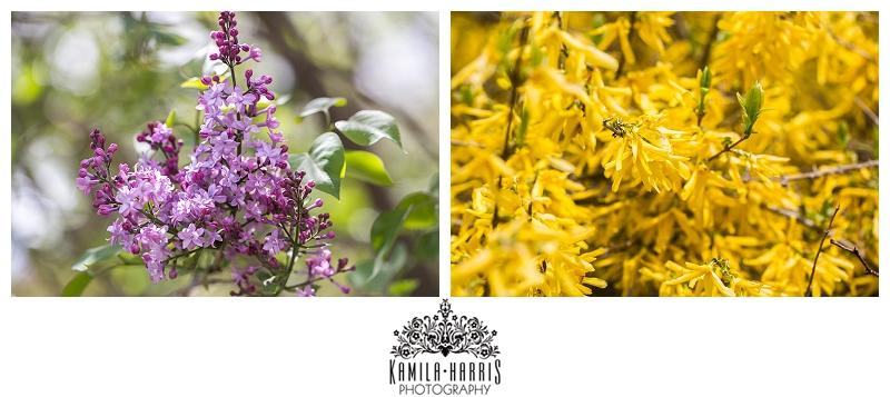 Brooklyn Botanic Garden Cherry Blossom Festival Kamila Harris Photography